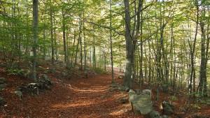 Ferienwohnung im Steigerwald