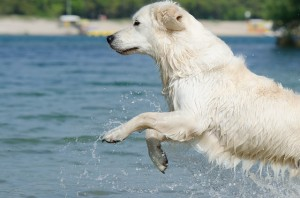 Ferienwohnungen mit Hund in Deutschland
